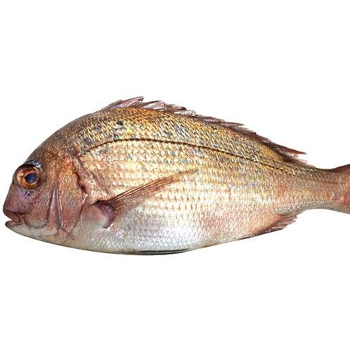 Whole Red Sea Bream Porgy ヨーロピアン鯛