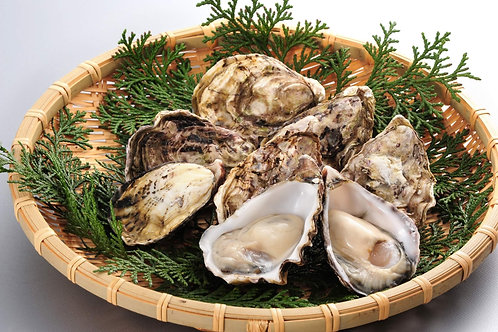 Kumamoto Oyster 1 dozen