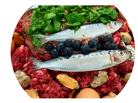 Should You Feed Your Pet Raw Food?