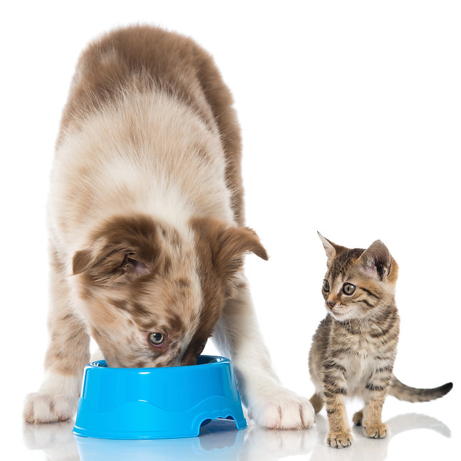 shutterstock_dog and cat.jpg