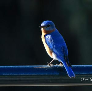 _Blue on Blue_