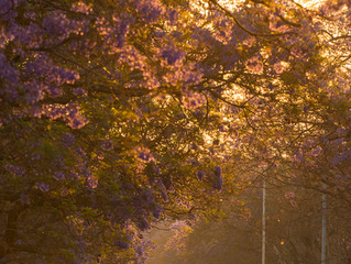 5 tips for capturing a Purple Paradise...