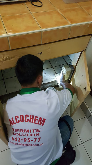 Baiting Against Cockroach, Ant, Rats and Mice in Cainta Rizal