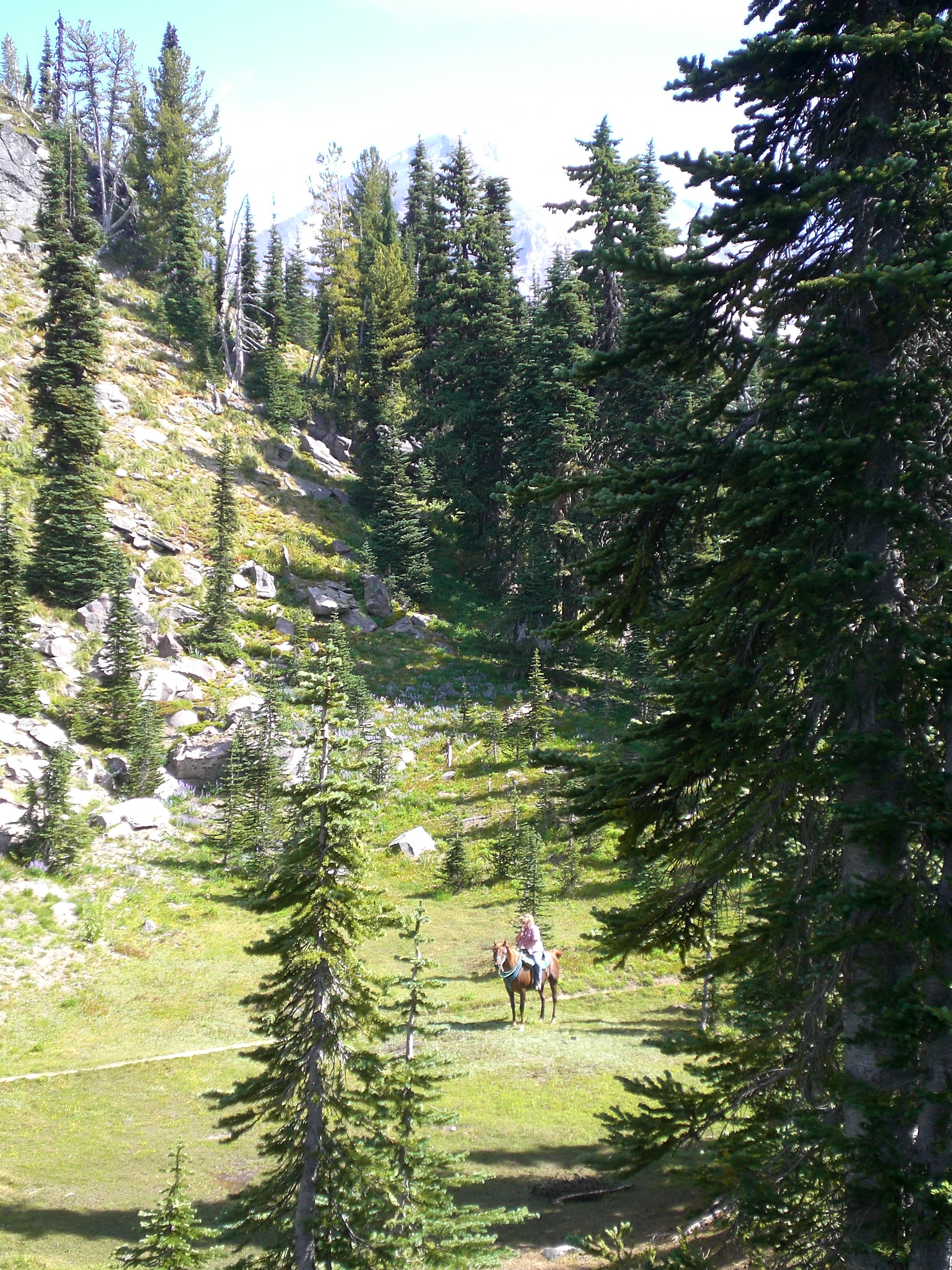 Horseback riding on Mount Adams