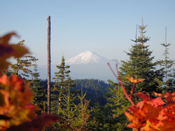 Mt. Adams and Fall Colors