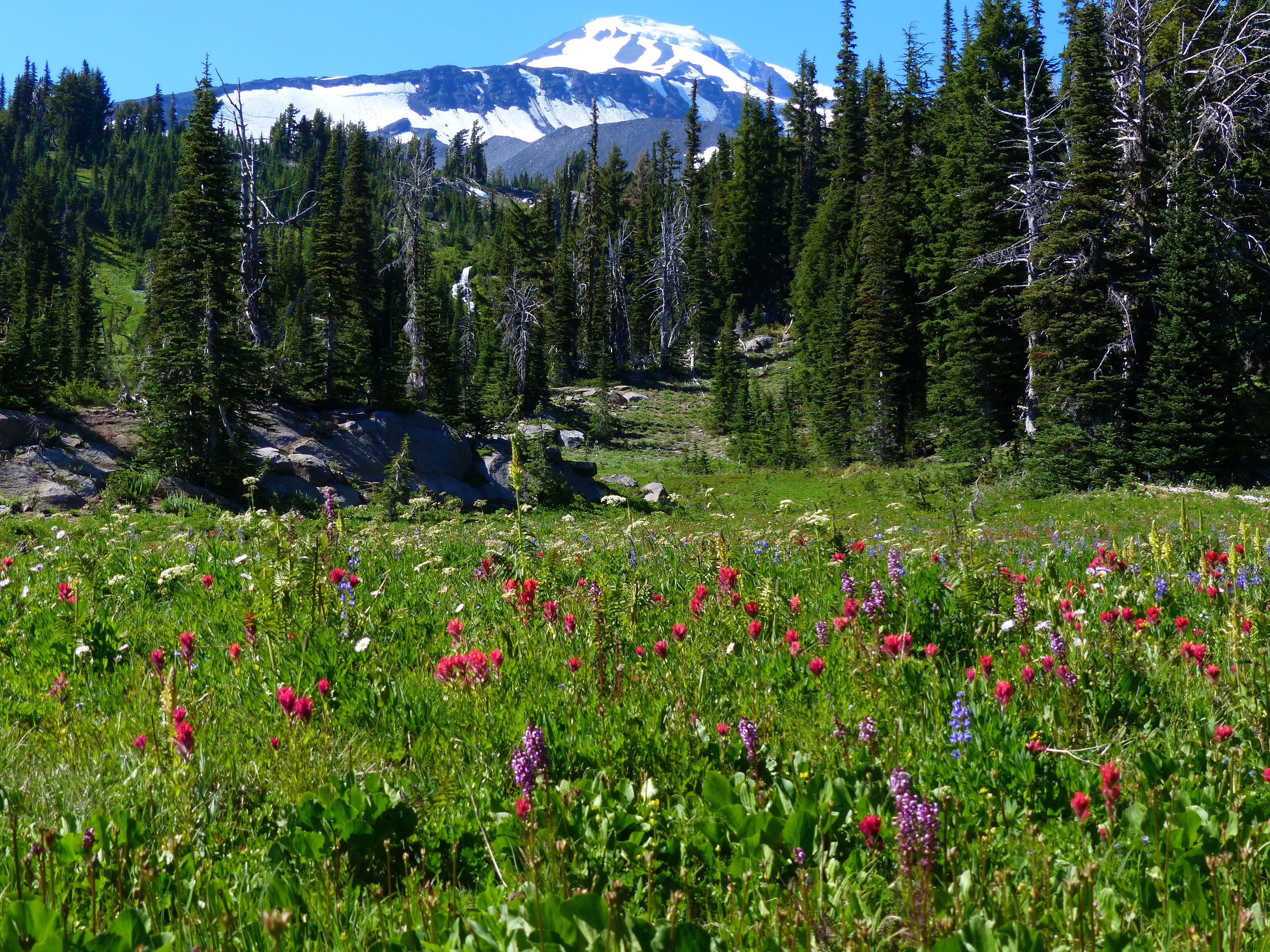 BIRD CREEK MEADOWS HIKE