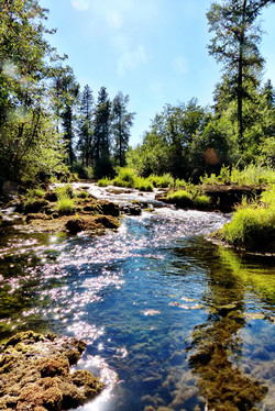 Trout Creek