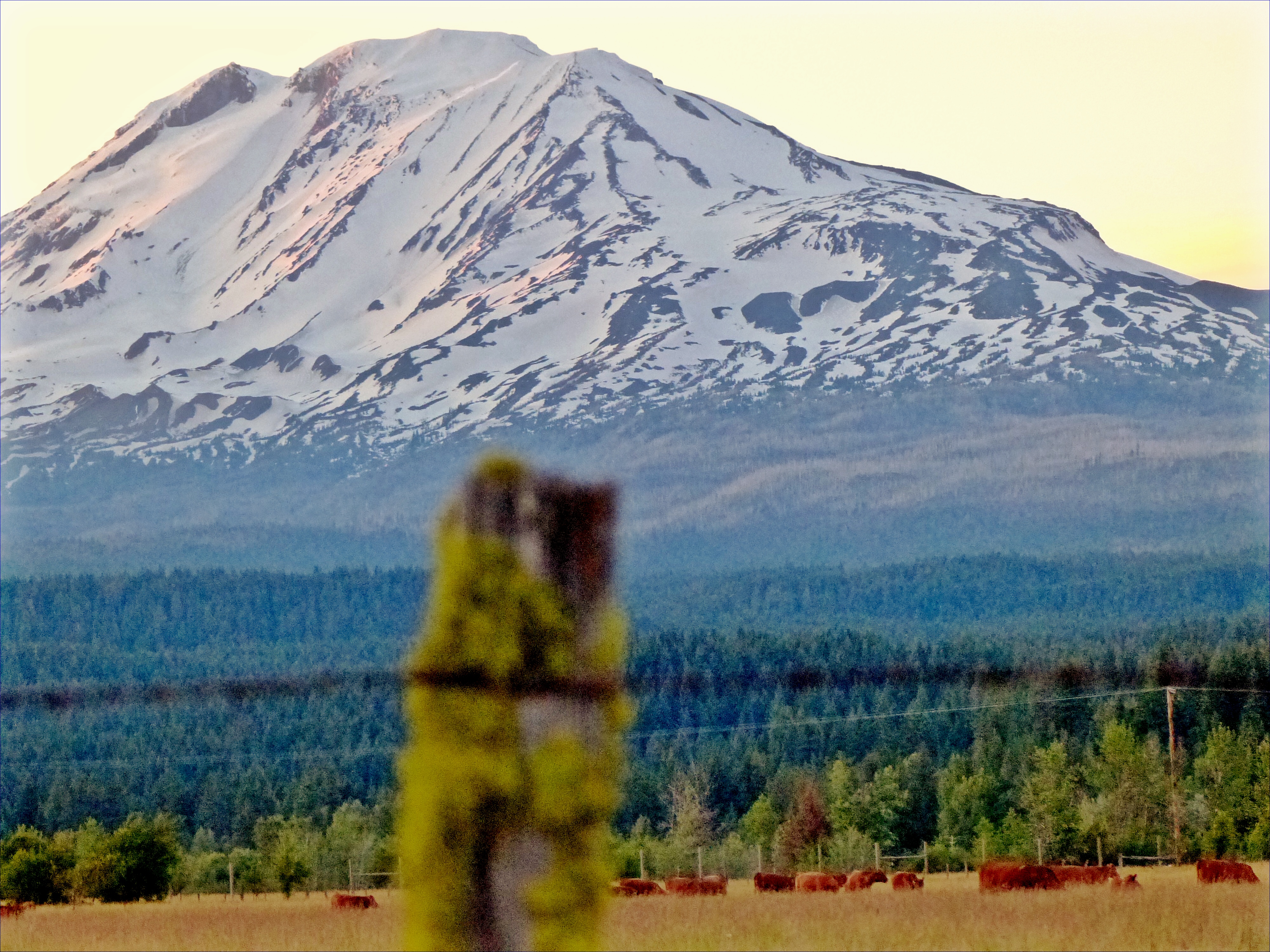 Mt Adams from Trout Lake, WA