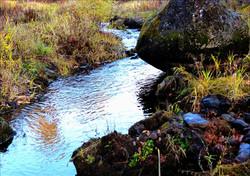 Trout Creek Side Channel