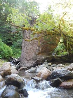 Lewis River Tributary - Alec Creek