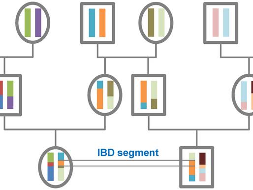 IBD 用於計算親緣SNP