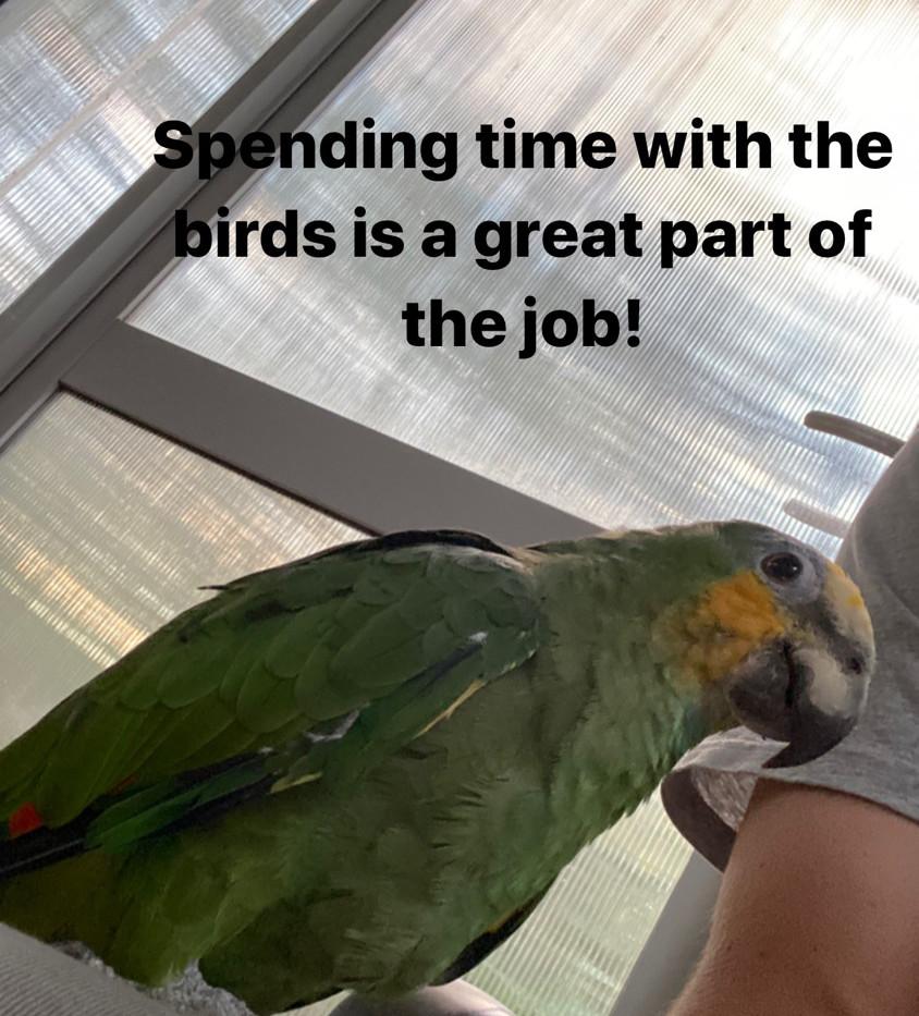 Job perk... bird time