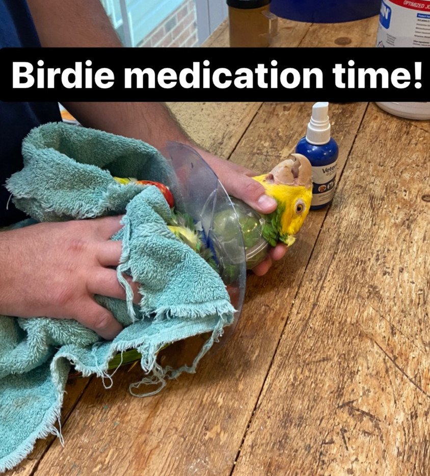 some birds have to be medicated
