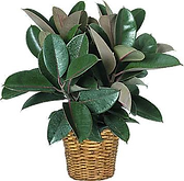 Soins Plantes vertes