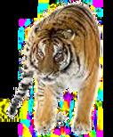 Le Tigre en Feng Shui