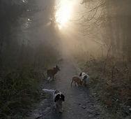 Foggy Winter Day.jpg