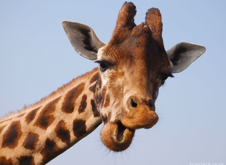 How a giraffe's bra can help you write better copy.