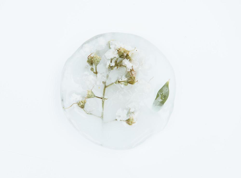 Blume im Eis