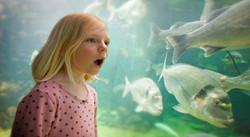 anglesey sea zoo.jpg