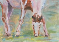 Horse eating grass 3 .jpg
