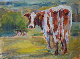 Guernsey+cow,sm+.jpg