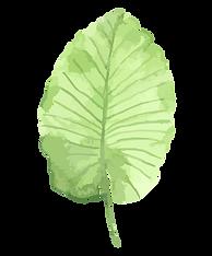 Tropické listy 1