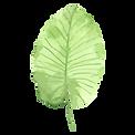열대 잎 1