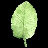熱帯の葉1