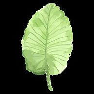 Tropical Leaves 1