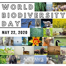 world biodiversity day.jpg