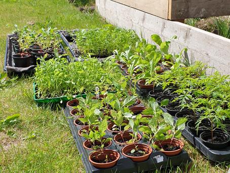 Planting Out! - Crop to Cloth / Cnwd i Frethyn