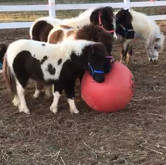 The Nay Nays are having a ball... HAHAHAHA!