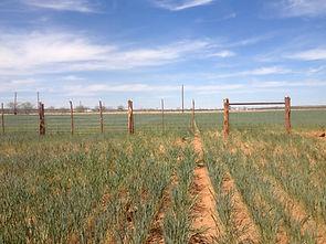 farm-fence-contractor-4.jpg
