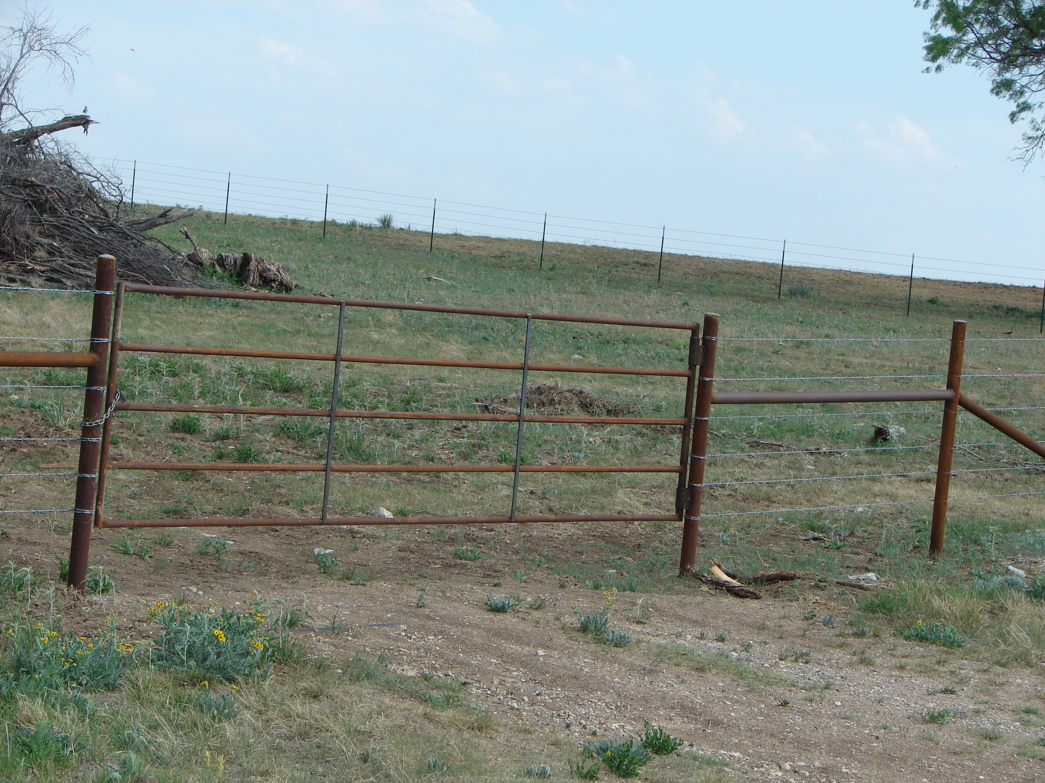 cattle-fence-contractor-8