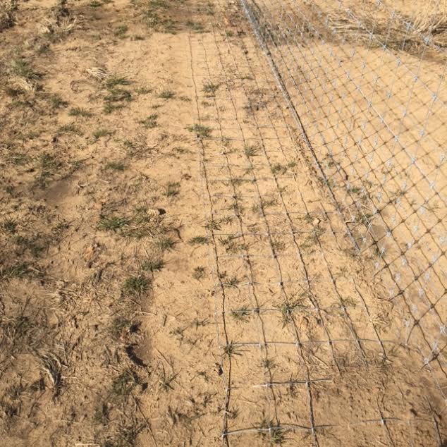 farm-fence-contractor-predator-control-2