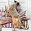 Thumbnail: Hundekissen ● Kissen ● Outdoor ● COLORE ● Grösse S–L