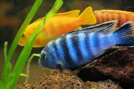 Fresh Water Aquariums Can Be Great Stress Relievers