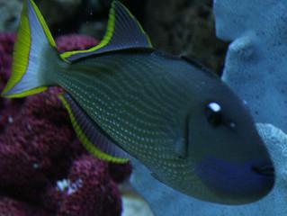 Press Release: San Antonio Custom Aquarium Firm Launches Brand New Website