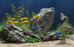 Right Fresh Water Aquarium For Your Fish