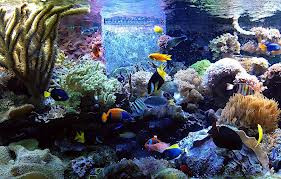 How To Select The Best Aquarium Contractors