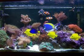 How Marine Aquarium Designs Wow Guests