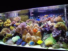 A Custom Designed Saltwater Aquarium Catches Attention