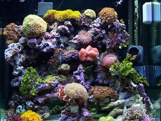 Reef Aquariums San Antonio - Starting Your Own Tank