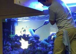 Aquarium Maintenance is Necessary for The Well-Being of Its Inhabitants