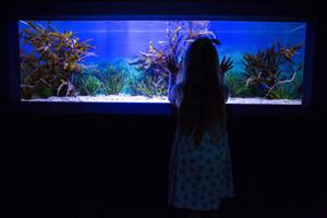 Create a lively atmosphere with a custom aquarium