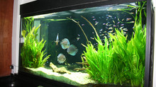 Landscaping With San Antonio Fresh Water Aquarium Plants