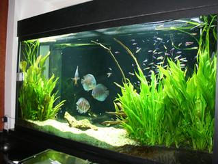 Landscaping With San Antonio Fresh Water Aquarium Plants