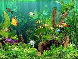Aquarium Setup: How To Setup Fresh Water Aquariums