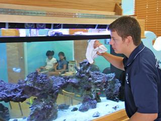 Aquariums. DIY or Professional Maintenance?