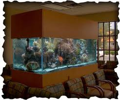 Aquariums in Medical and Dental Offices? Stress Reliever